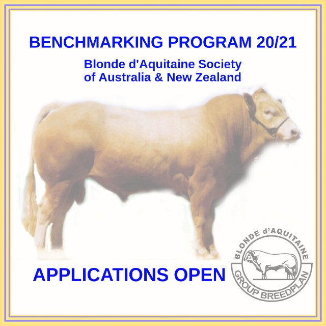 blonde cattle benchmarking